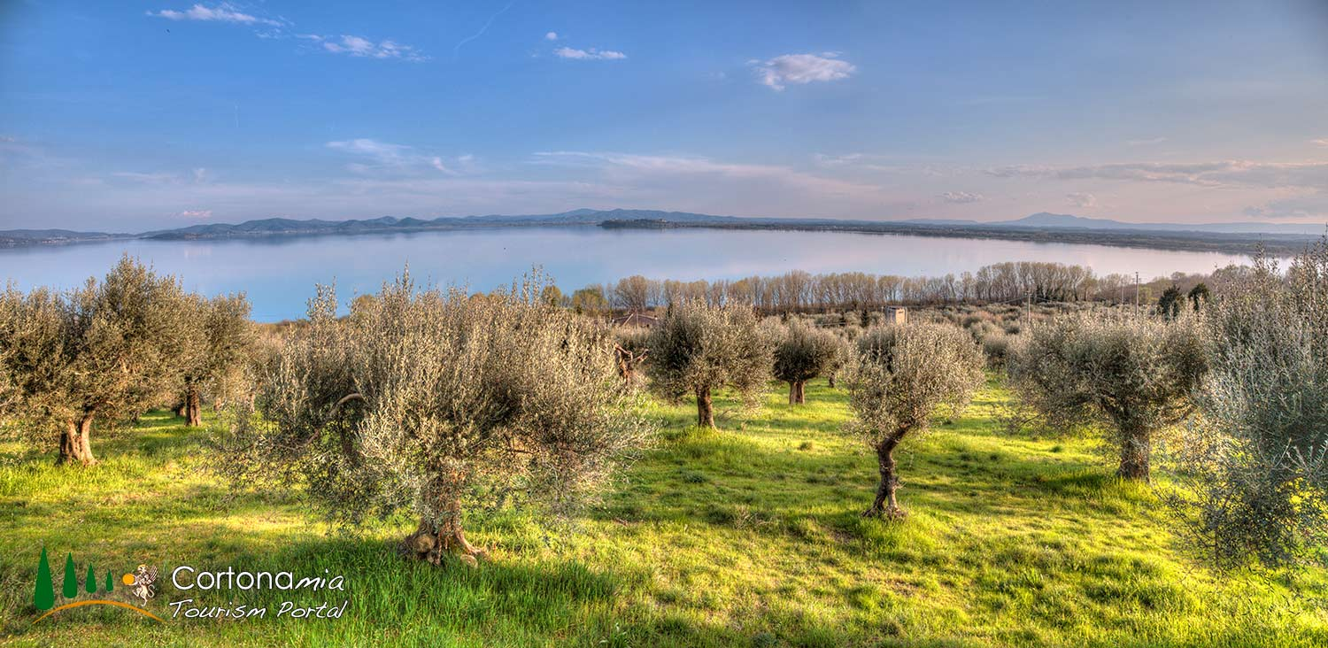 olive-tree-over-the-lake